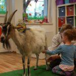 Koza w przedszkolu
